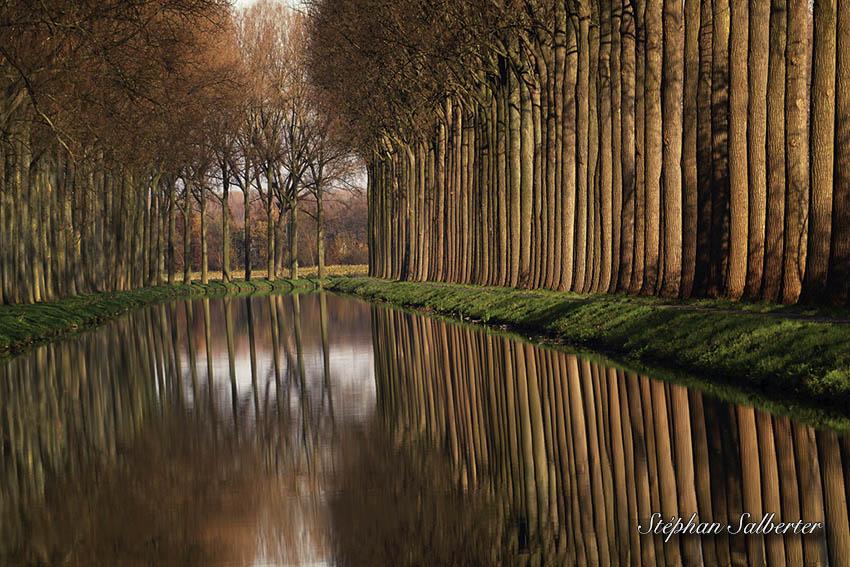 Trees Memoires